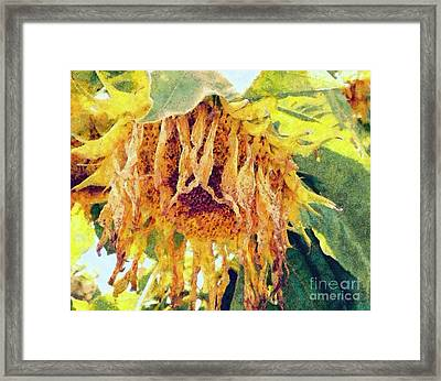 Wilted Sunflower - What A Day Framed Print by Janine Riley