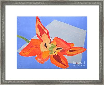 Wilted Tulip Framed Print