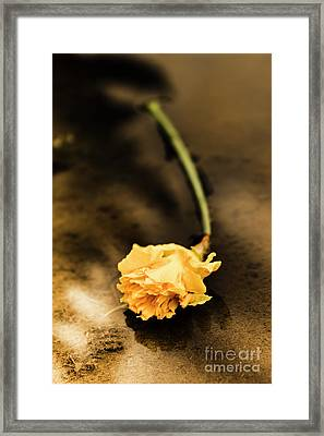 Wilting Puddle Flower Framed Print by Jorgo Photography - Wall Art Gallery