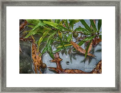 Wind And Rain  Framed Print