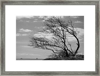Wind Blown Framed Print by Catherine Reusch Daley