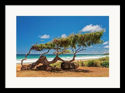 Windblown Framed Prints