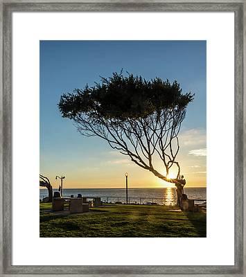 Wind Blown Tree Framed Print