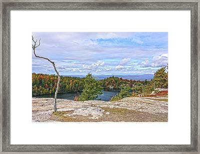 Wind Blown Tree In Autumn Framed Print