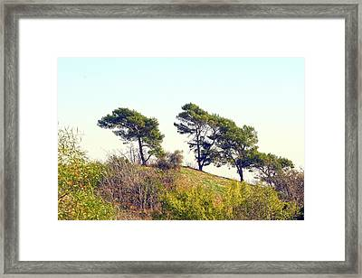 Wind Blown Trees Framed Print