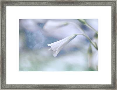 Wind Chimes  Framed Print by Connie Handscomb