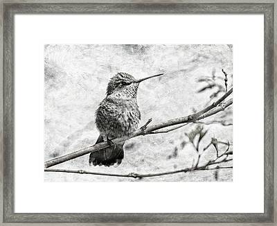 Framed Print featuring the photograph Wind In Her Feathers by Angie Vogel
