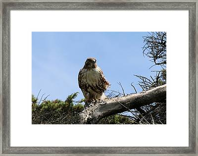 Framed Print featuring the photograph Wind In My Feathers by Christy Pooschke