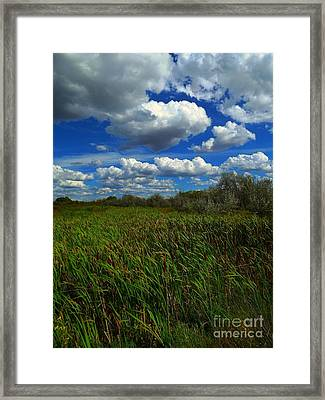 Wind In The Cattails Framed Print by Annie Gibbons