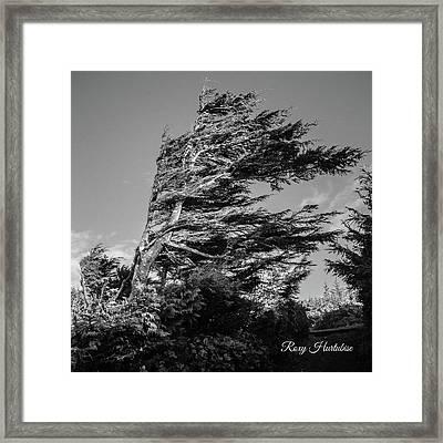 Wind Shaped Tree Framed Print
