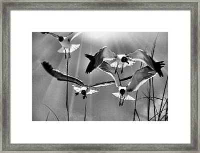Framed Print featuring the photograph Wind Swept Bw by Jan Amiss Photography