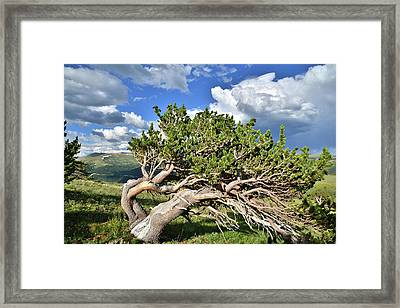 Wind Swept Framed Print by Ray Mathis