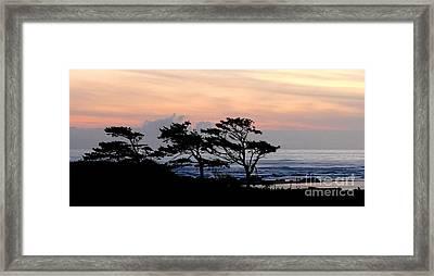 Wind Swept Framed Print by Terri Thompson