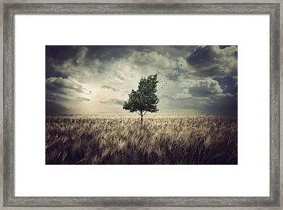 Wind Framed Print by Zoltan Toth