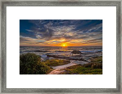 Windansea Framed Print by Peter Tellone