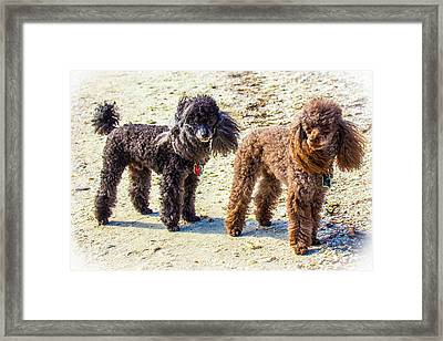 Windblown Beach Bums Framed Print