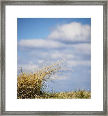Windblown Grass In Great Smoky Mountains National Park Tennessee Framed Print by Brendan Reals