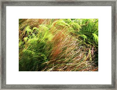Windblown Grasses Framed Print