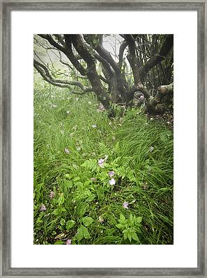 Windblown Grassy Craggy Framed Print