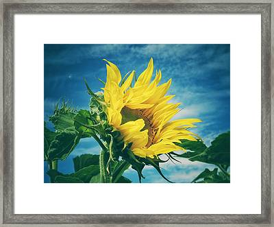 Framed Print featuring the photograph Windblown  by Karen Stahlros