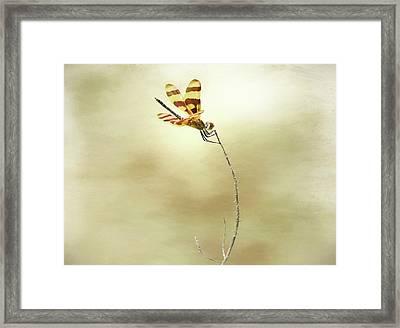 Windblown Framed Print by Steven Michael