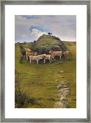 Windbreak Framed Print