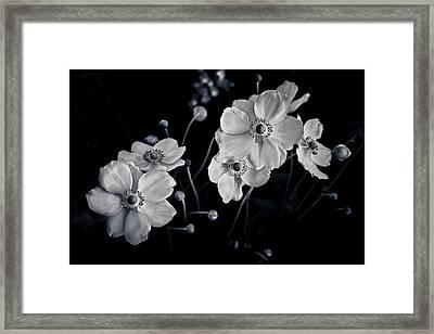 Windflowers Encore Framed Print by Maggie Terlecki