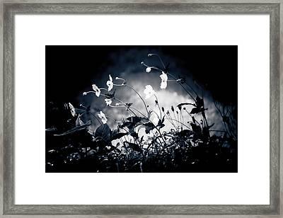 Windflowers  Framed Print by Maggie Terlecki
