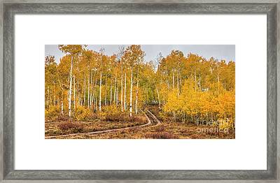 Framed Print featuring the photograph Winding Autumn Road by Spencer Baugh