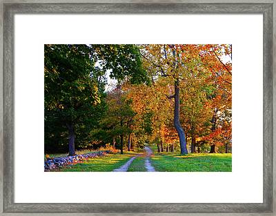 Winding Road In Autumn Framed Print