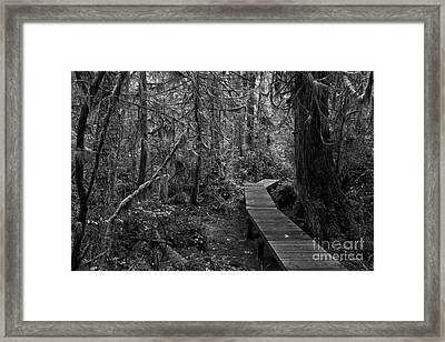 Winding Through The Rainforest Black And White Framed Print by Adam Jewell