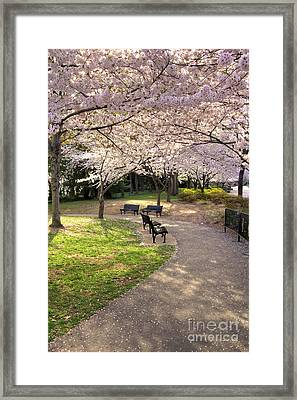 Winding Trail To The Tidal Basin Framed Print