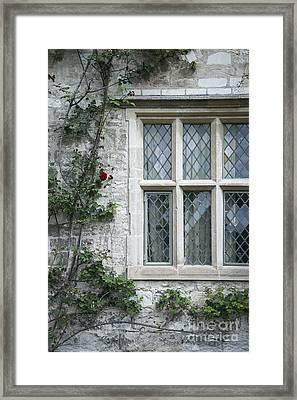 Window And Rose Framed Print by Svetlana Sewell