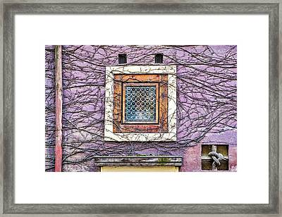 Window And Vines - Prague Framed Print