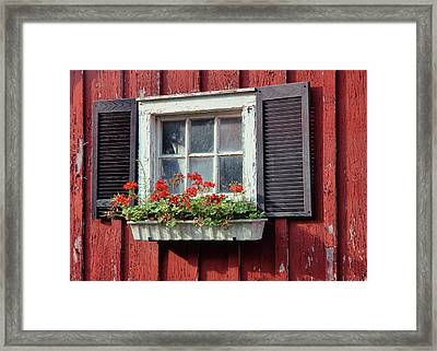 Window Box Framed Print by Dressage Design