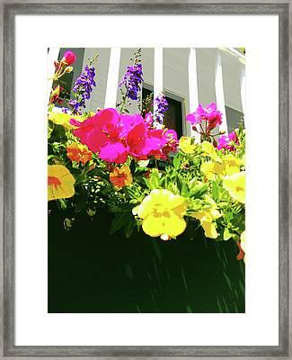 Window Box Framed Print by Susan Lafleur