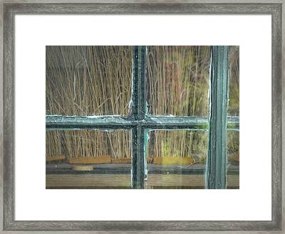 Window Brushes At Connetquot State Park, Long Island Framed Print