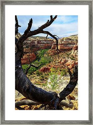 Window Framed Print by Chad Dutson