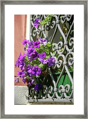 Window In Bloom Framed Print