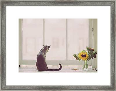 Window In Summer Framed Print by Cindy Loughridge