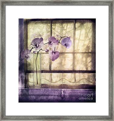 Window Orchids Framed Print by Mindy Sommers