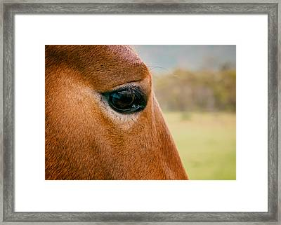 Window To The Soul Framed Print by Nicholas Blackwell