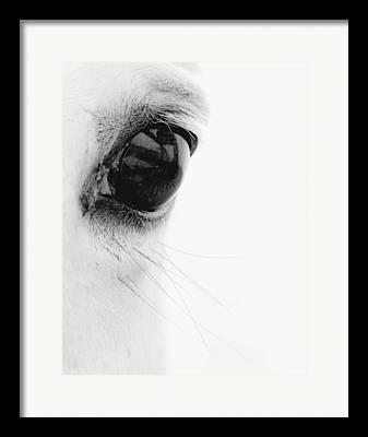 White Horses Framed Prints