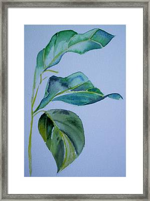 Window View Framed Print by Suzanne Udell Levinger
