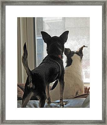 Window Watch Dogs Framed Print by Barbara McDevitt