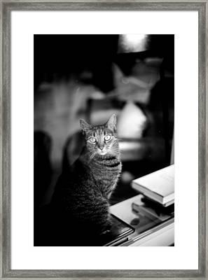 Window Watching Framed Print