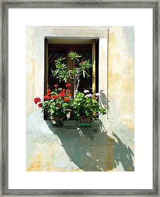 Framed Print featuring the photograph Window With A Tree by Donna Corless