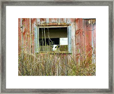 Windows App Framed Print