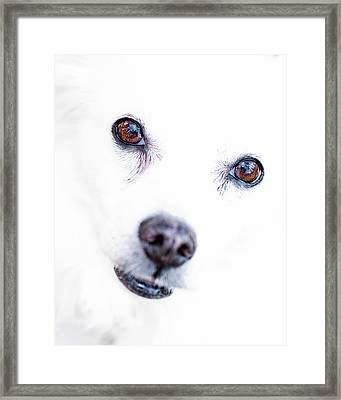 Framed Print featuring the photograph Windows To The Soul by Lara Ellis