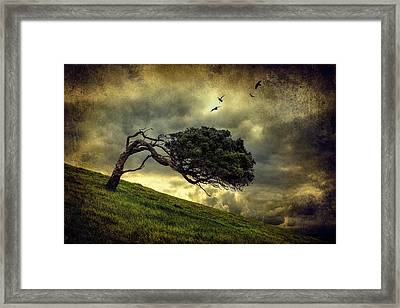 Winds Of Change Framed Print by Peter Elgar
